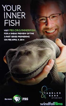 Cele mai noi subtitrari de pe net subtitrari for Your inner fish